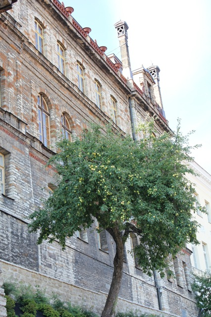 A beautiful apple tree in front of a really cool looking building.