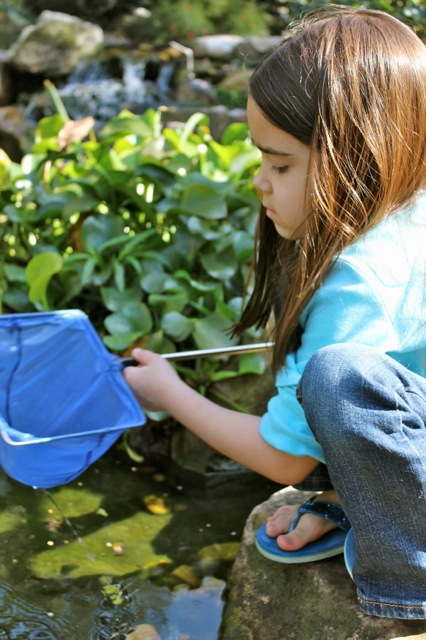 Mia spends a lot of time with this little net catching some of the minnows in the pond.