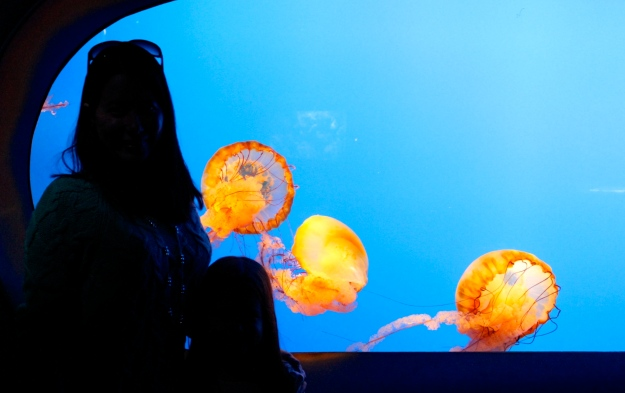 "Mia and I with some ""Twisty"" jellyfish at the Ripley's Aquarium of the Smokies in Gatlinburg, Tennessee."