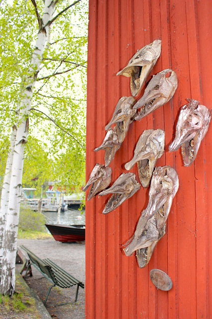 A cool display of fish heads at the Fjäderholmarna island.