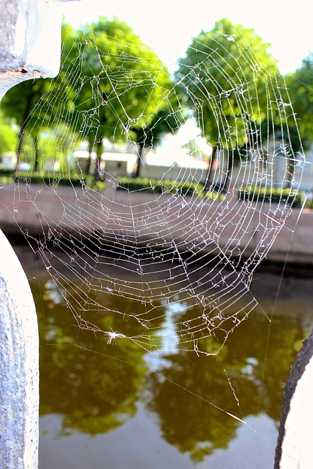 A frayed spider web in St. Petersburg, Russia.