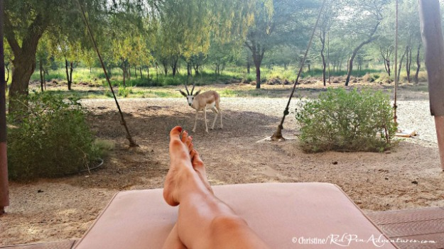 I was relaxing on the back porch of our villa and couldn't believe how close this beautiful sand gazelle came up to me! What an amazing experience!!