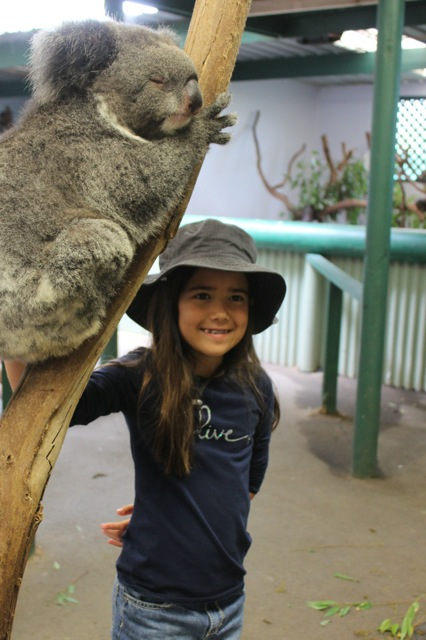 We really enjoyed meeting the koala bears at the Featherdale Wildlife Park in Sydney.