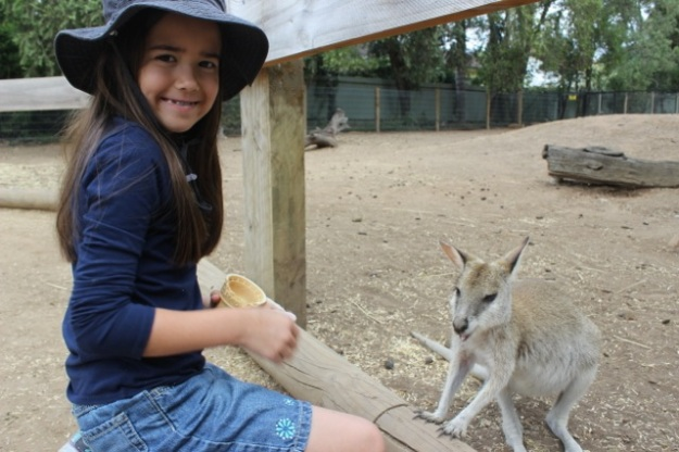 Mia had a great time hanging out with all of the kangaroos at the back of the park!