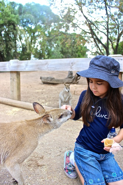 Mia feeding one of the kangaroos an ice cream cone!