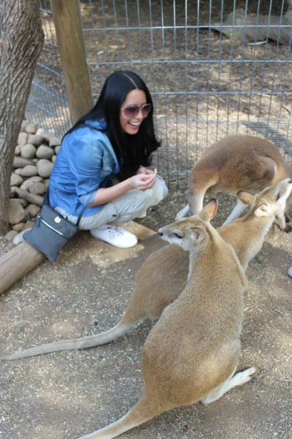 The kangaroos were pretty funny and we really enjoyed the time we had with them at this amazing park!